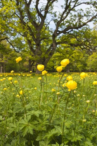 11829409-blommande-smorbollar